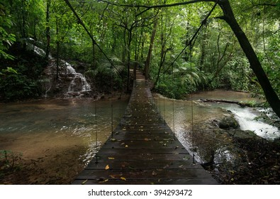 Bridge over forest creek, Mexico