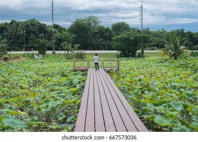 Bridge over lotus pond