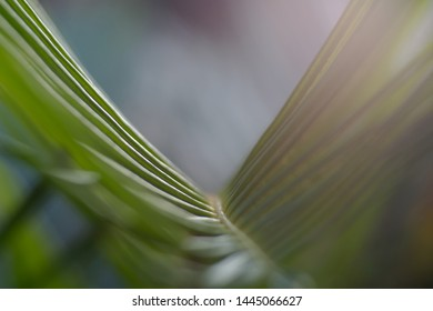 the bridge or palm leaf