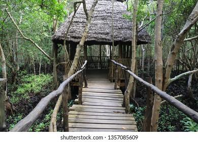Bridge to summerhouse in mangrove forest, Zanzibar