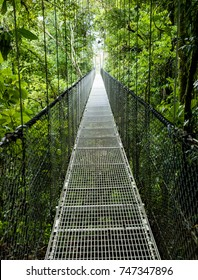 Bridge through the Canopy - Costa Rica Rainforest