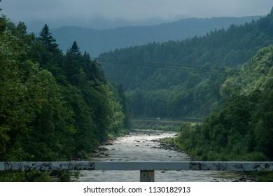 Bridge  through the river in firest
