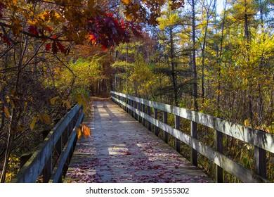 Bridge through the woods.