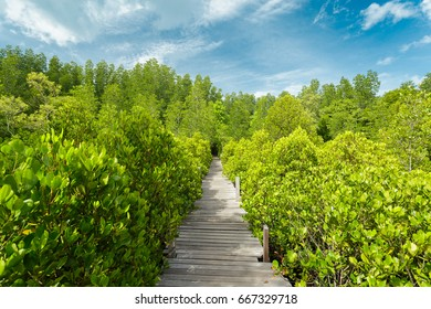 Bridge way in Mangrove forest in Rayong, Thailand