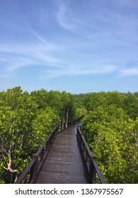 Bridge wooden over the green firest.