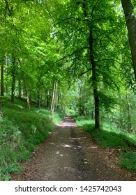 Bridle path through beech woods in the Chilterns on a summer day