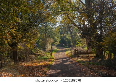 Bridleway near Hidcote, Cotswolds, England