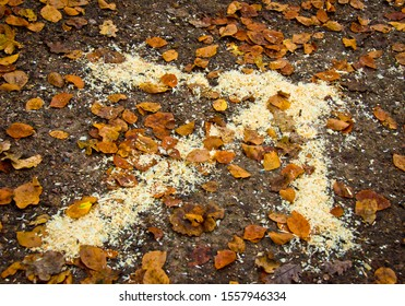 A bright arrow laying on the ground in a forest