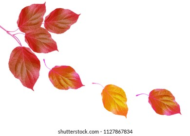 Bright autumn leaf on a white background.