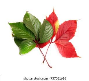 Bright autumn leaves.