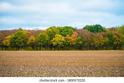 A bright autumn morning in the English countryside. The newly-ploughed fields are offset by the background of colourful trees.