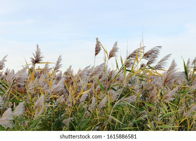 bright autumn reed against the sky 4896 x 3264 300dpi