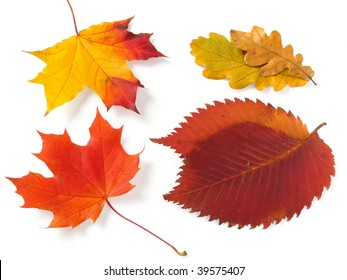 bright autumnal leaves from different trees