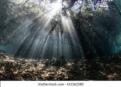 Bright beams of sunlight filter through the canopy of a mangrove forest in Raja Ampat, Indonesia. Mangroves throughout the world play a vital ecological role as a nursery for fish and invertebrates.