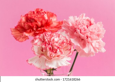 Bright, beautiful and fragrant carnations