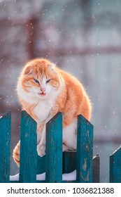 bright beautiful funny red cat sitting outside at the beginning of the horsen on a wooden fence during snowfall and washing