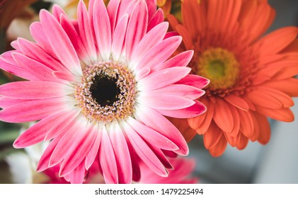 Bright beautiful red and yellow flowers gerbera. Floral still life
