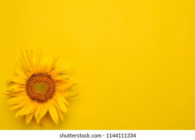 Bright beautiful yellow sunflower on a bright yellow background. view from above. with place for inscription