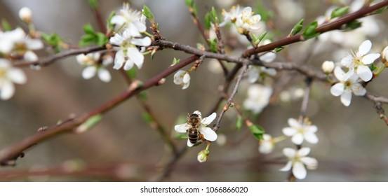 bright bloom in the garden