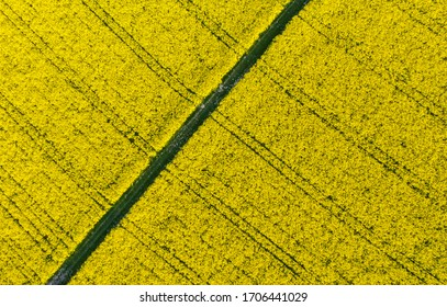Bright Blooming Rape field view from above Agriculture Industry Landscape Germany