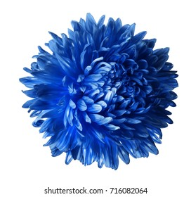 Bright blue  aster flower isolated on white background with clipping path.  Closeup no shadows.  Nature.