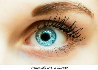 Bright Blue Eye Close Up Female Face