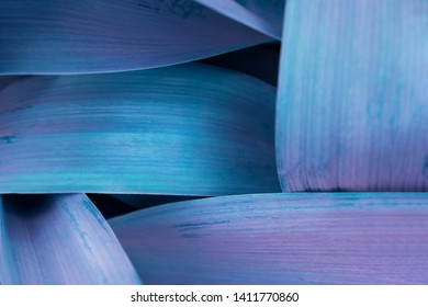 Bright blue leaves top view minimalistic background. Foliage plant, flower indigo petals texture. Houseplant branches close up backdrop concept. Floristry hobby. Web banner, poster, postcard idea