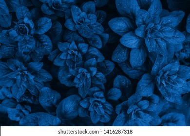 Bright blue leaves top view minimalistic background. Floral backdrop concept. Color of the summer 2019. Flower petals close up. Floristry hobby. Web banner, greeting card idea