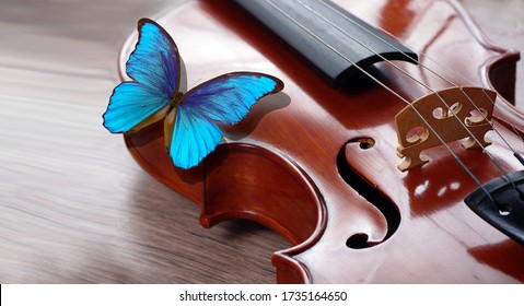 bright blue morpho butterfly sitting on the violin. melody concept