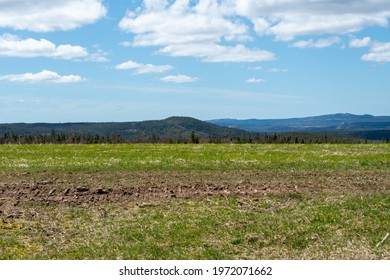 A bright blue sky meets rural barren tundra, parched earth. The peat moss is yellow and there's very little green grass on the land. The dry bare countryside has a steady incline to the rocky hill.