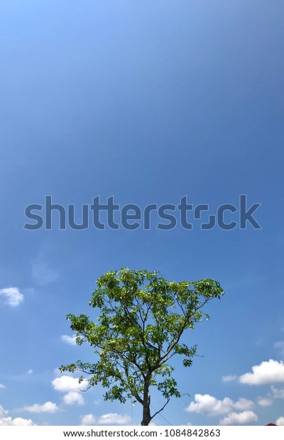 Bright blue sky with tree top and some clouds. Negative space.