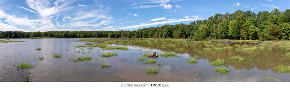 A bright blue sky with wispy clouds above a panoramic landscape view of a Virginia wetland.