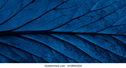 Bright blue top view with veins minimalistic background. Floral backdrop concept. Flower petals close up. Floristry hobby. Web banner, greeting card idea