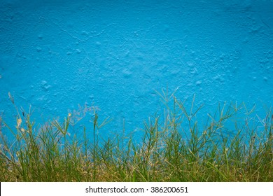 Bright blue wall as background with green grass as foreground