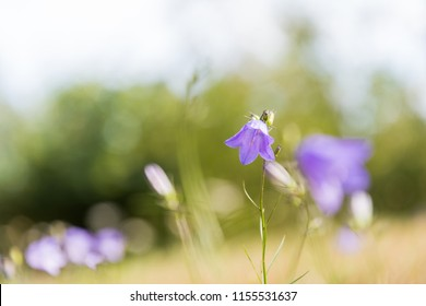 Bright bluebell flower with a soft green background