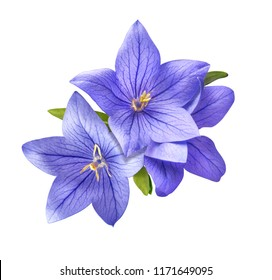 bright bluebell flowers bouquet isolated on white background
