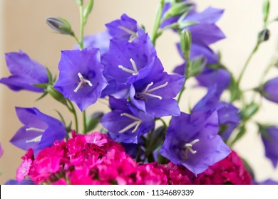 Bright bouquet of summer flowers - blue bells and small carnations flowers