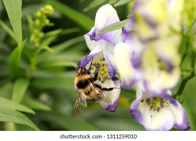bright bumblebee on large motley colors of blue and white