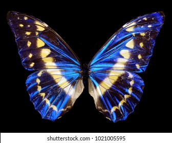 bright butterfly on a black homogeneous background