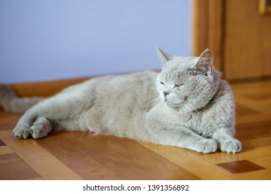 Bright cat lying on the floor. The concept of pets. - Shutterstock ID 1391356892