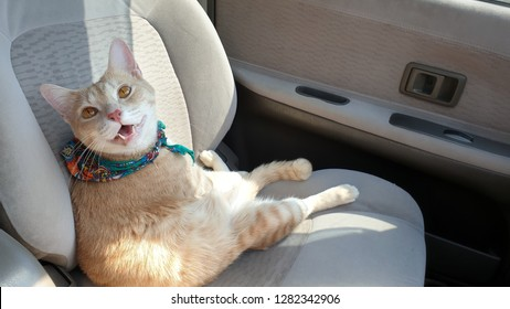 a bright cat wearing fabric collar sitting on the seat inside a car when travel with owner.A cat sit like human looking owner.