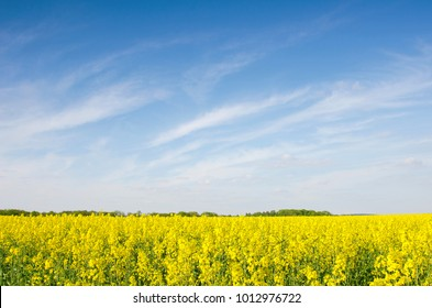 Bright cheerful spring landscape with yellow rape field against the sky with bands of clouds
