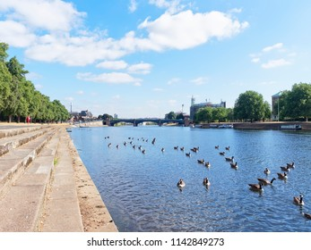 A bright, clear sunny summers day and Canada Geese swim on the River Trent with Trent Bridge in the background