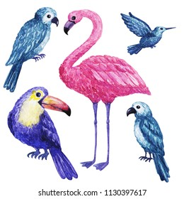 Bright color Exotic tropical birds. watercolor illustration, flying bird isolated on white background, exotic, tropical, wild life clip art. Hand drawn sketch watercolor tropical bird.