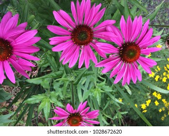 Bright colored flowers in summer garden