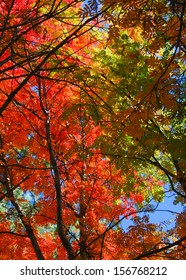 bright colored leaves on the branches