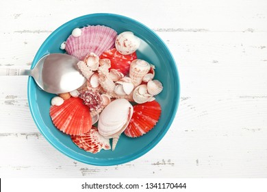 Bright colored seashells in blue plate with water. Vacation, sea trip concept