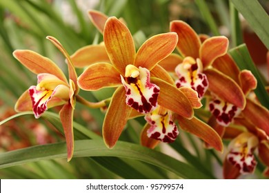 Bright colored wild orchid as floral background