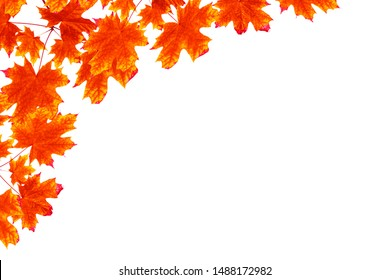 Bright colorful autumn leaves isolated on white background. nature
