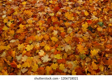 Bright and colorful background made of fallen autumn leaves. Autumn leaves background. Fall.